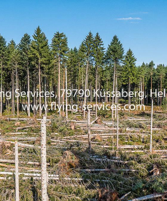 Luftbild Dokumentation Tornado Schaden 2015 Bonndorfer Wald FS P1050738